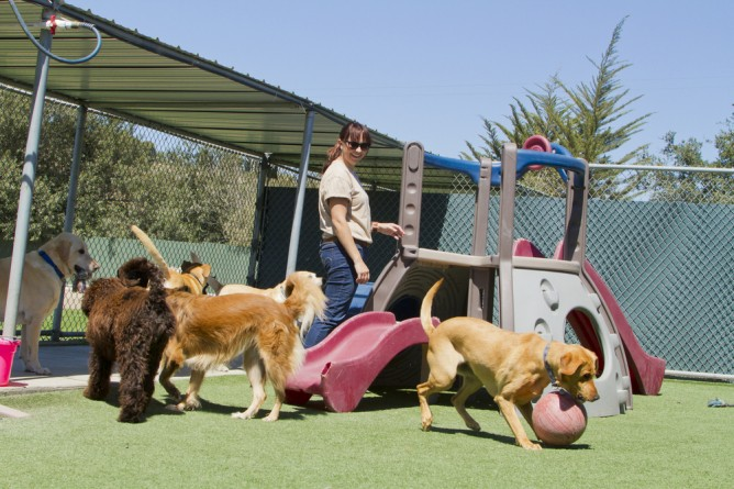 Choose the Best Boarding Services for Your Pets